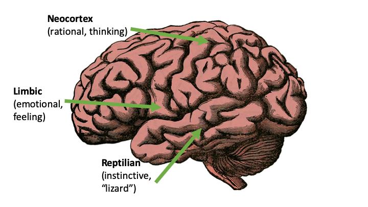 Three Brains