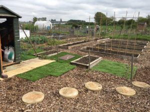 Anne's allotment