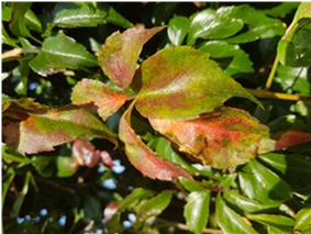 Plant Lois' Blog