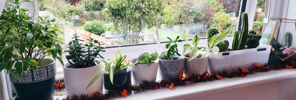 Vickie's Plants 2