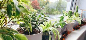 Vickie's Plants