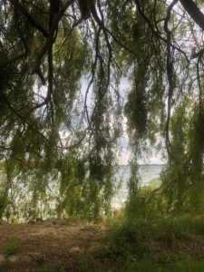 green trees near a lake