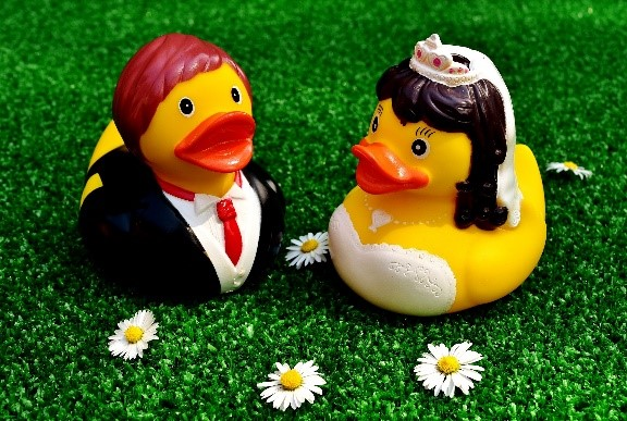 Two ducks on grass getting married